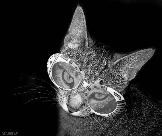 Just Looking   - ID: 1945154 © Theresa Marie Jones