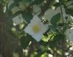 Lone White Flower...
