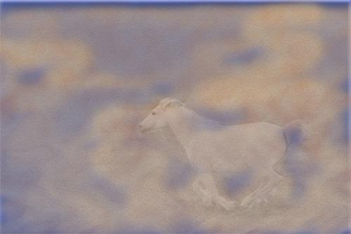 Sand Pony