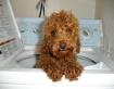 Bath time for Sko...