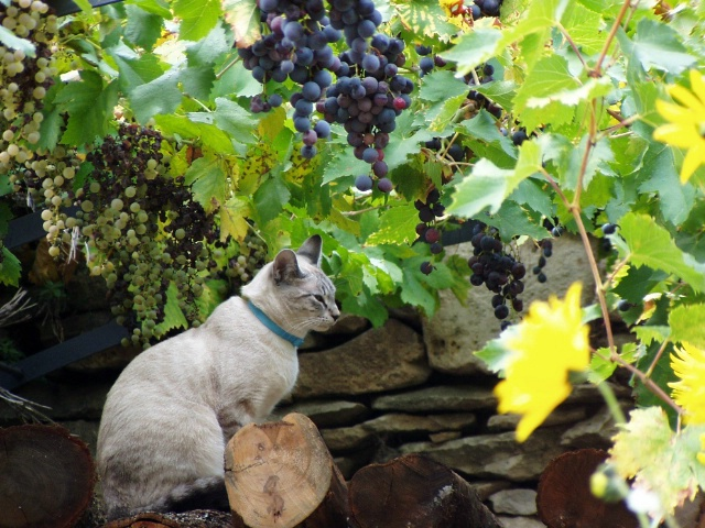 Cat in Provence