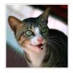 The Cat2