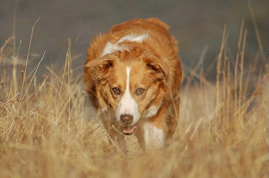 Daisy, my bright as sunshine dog.