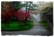 Foggy path at the...