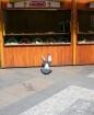 Bird landing in W...
