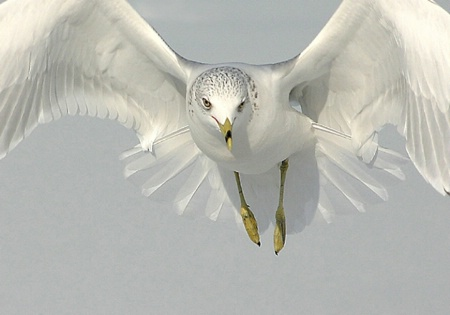 A Seagull Encounter , Close-Up