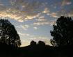Southern Silhouet...