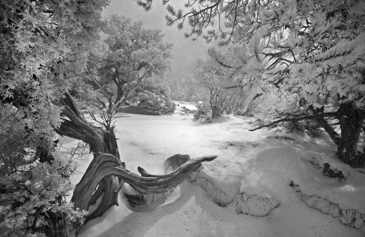 Winter Wonderland - Grand Canyon