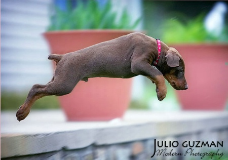 """Picasso @ 7 weeks """"Up Up and Away"""""""