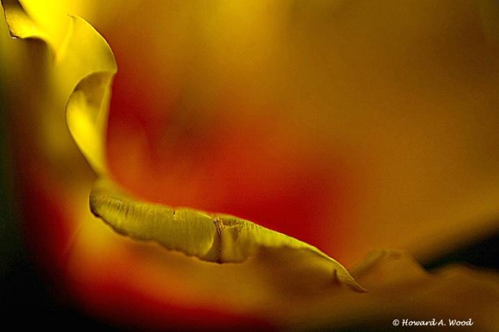 Poppy Detail