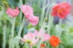 Spring Color Popp...