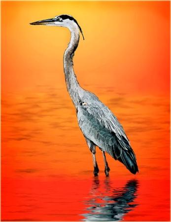 Wading at Sundown