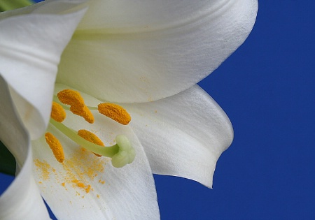 ~ Lily ~