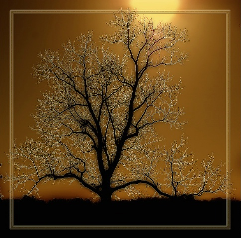 Golden Sunset Tree
