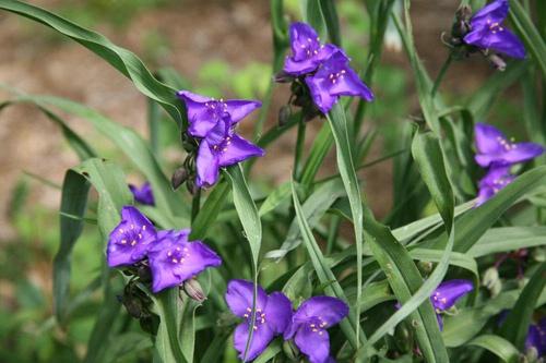 May flower original - ID: 2080347 © Rob Mesite