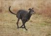 Nero on a fun run...