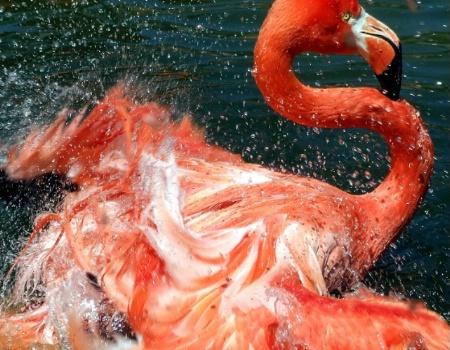 Fluttering Flamingo