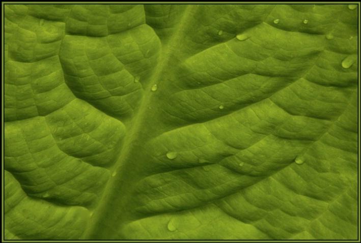 leaf detail 1 - ID: 2096912 © Stuart May