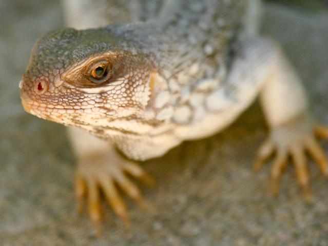 Lizard Profile