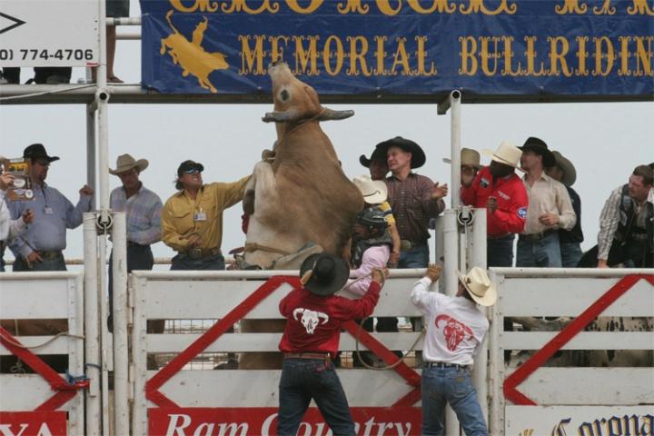 Fiesty Bull #2 - ID: 2133572 © Emile Abbott