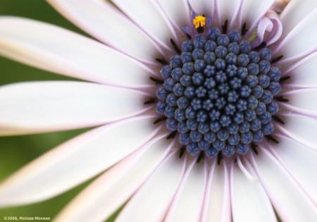 'Flowerpower Purple'