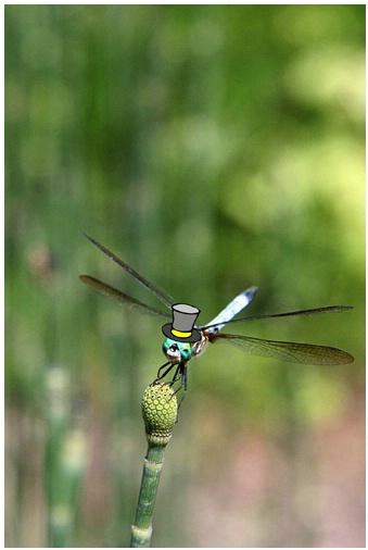 Dandifly