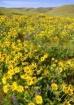 Wildflower Hills