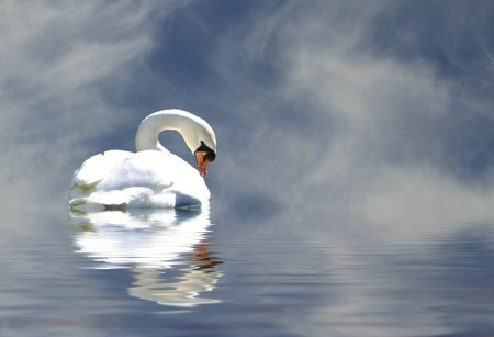 Swan 614