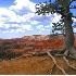© Mary Iacofano  PhotoID# 2166907: Bryce Canyon
