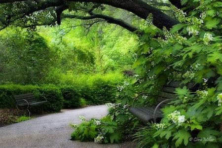 Urban Oasis - Fort Worth Botanic Gardens