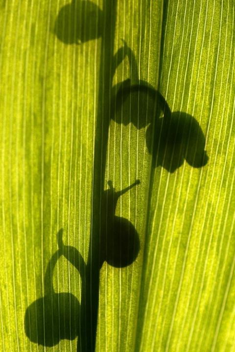 A visitors shadow