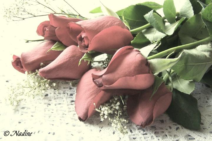 Kristen's Roses