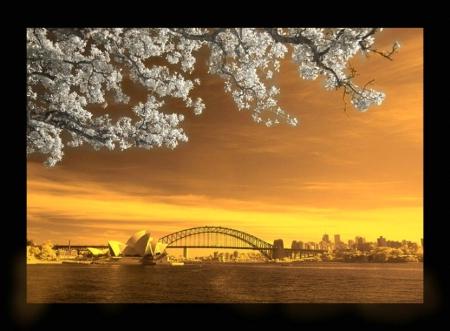 HARBOR BRIDGE SUNSET