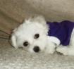 New Puppy Alaska