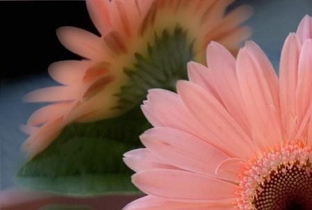 Peek - A - Boo Flower