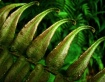 Metallic fern