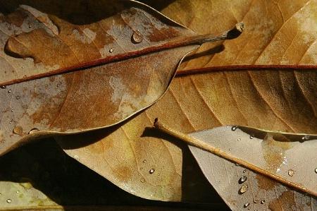 Still-Leaf