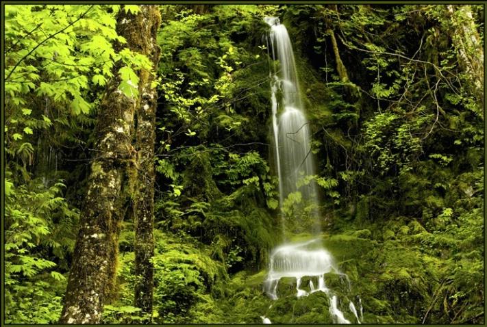 Quinault falls 2 - ID: 2197884 © Stuart May