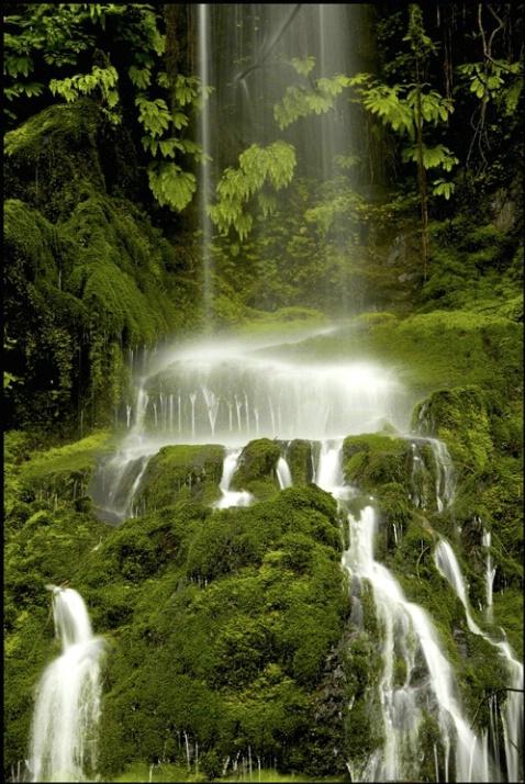 Quinault falls 1 - ID: 2197885 © Stuart May