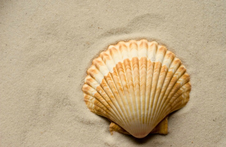 lonely shell - ID: 2198169 © Sibylle Basel