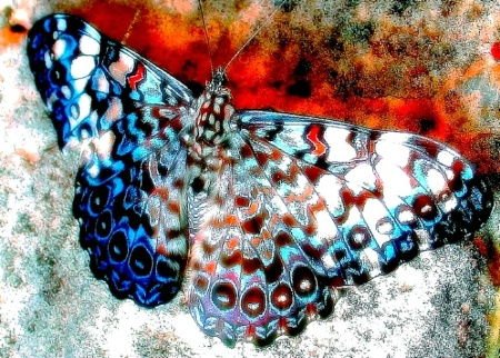 Butterfly Digital
