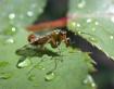 scorpio fly