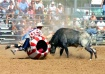 Rodeo Clown & Bul...
