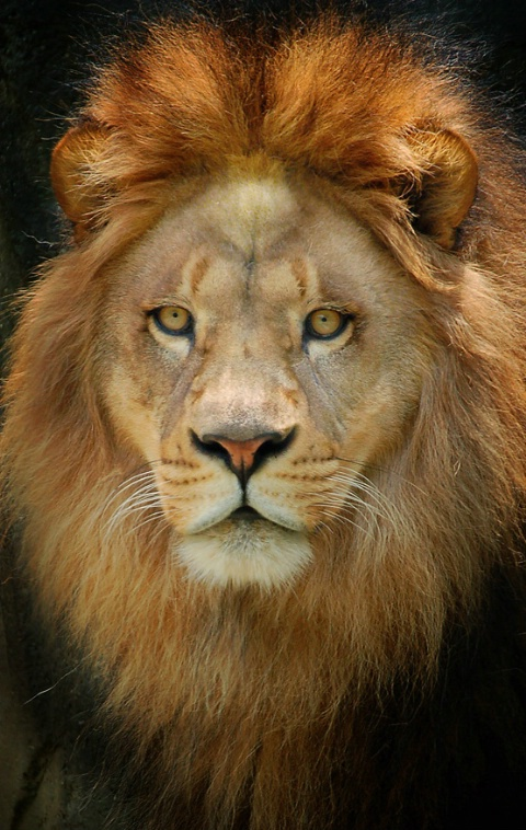 The King of the Jungle Indeed!