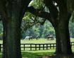 Live Oak Frame
