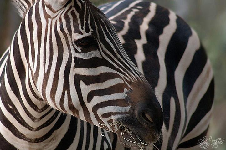 Natural Stripes