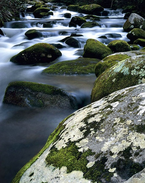 moss on rocks and stream - ID: 2229042 © Brian d. Reed