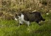 Farmcat