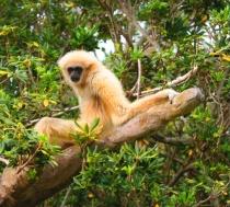 Monkey?