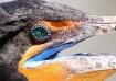 Cormorant in bree...